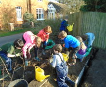 Planting a Native Hedge 2